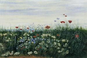 Poppies, Daisies and Other Flowers by the Sea by Andrew Nicholl