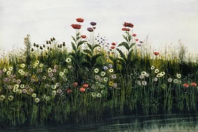 Poppies, Daisies and Thistles on a River Bank