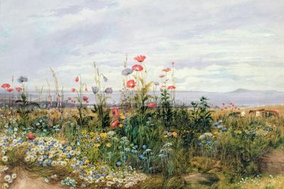 Wildflowers with a View of Dublin Dunleary