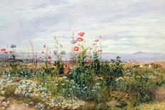 Wildflowers with a View of Dublin Dunleary-Andrew Nicholl-Giclee Print