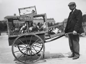 Barrow of Birds at the Paris Animal Market, 20th Century by Andrew Pitcairn-knowles