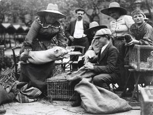 Pig Lady at the Paris Animal Market, 20th Century by Andrew Pitcairn-knowles