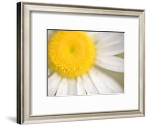White Flower Close Up, the White River, Akansas by Andrew R. Slaton