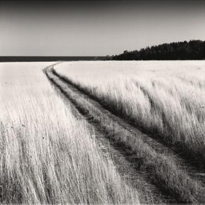 Oceanside Field by Andrew Ren