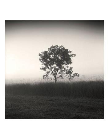 Tree, Study #3