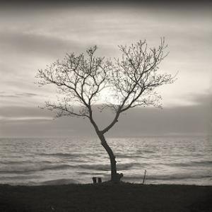 Tree, Study, no. 5 by Andrew Ren