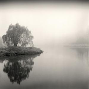Tree, Study, no. 9 by Andrew Ren