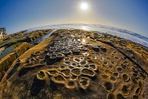 Interesting Tide Pools in La Jolla, Ca by Andrew Shoemaker