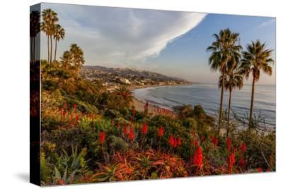 Overlooking Blooming Aloe in Laguna Beach, Ca