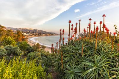 Overlooking Blooming Aloe in Laguna Beach, Ca by Andrew Shoemaker