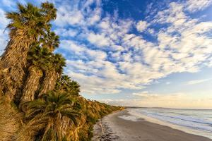 The Golden California Coastline at Swami's Beach in Encinitas, Ca by Andrew Shoemaker