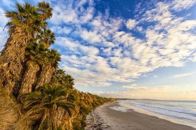 The Golden California Coastline at Swami's Beach in Encinitas, Ca by Andrew Shoemaker