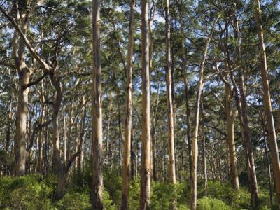 Australia, Western Australia, Leeuwin-Naturaliste National Park, Boranup