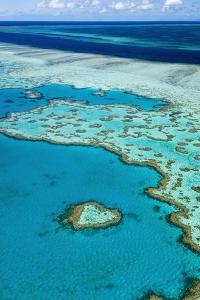Great Barrier Reef by Andrew Watson