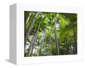 Queensland, Fraser Island, Tropical Palms in the Rainforest Area of Wanggoolba Creek, Australia by Andrew Watson