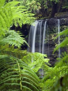 Russell Falls Through Ferns by Andrew Watson