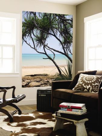 Vestey's Beach Through Pandanus Palms