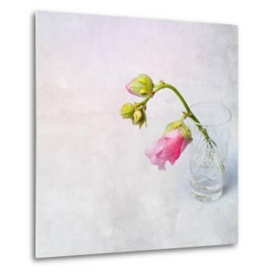Pink Mallow in Crystal Glass on Grunge Background