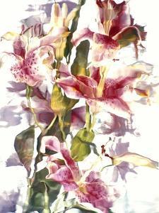 Flowers by Andrzej Pluta