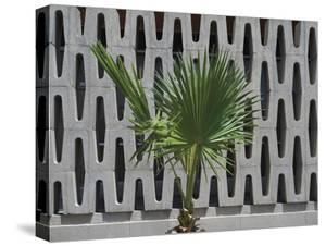 A Palm Against Grey by Andy Burgess