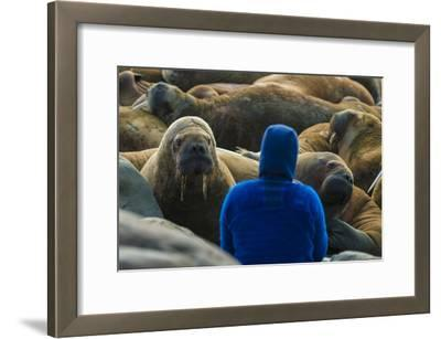 A Man Surrounded by Walruses Off Hooker Island