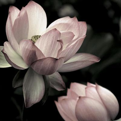The Lotus II