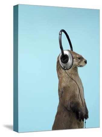 Sea Otter Listening to Headphones
