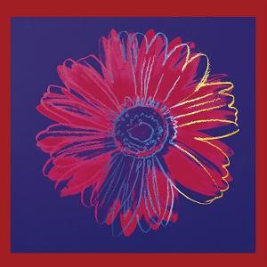 Daisy, c.1982  (blue and red) by Andy Warhol