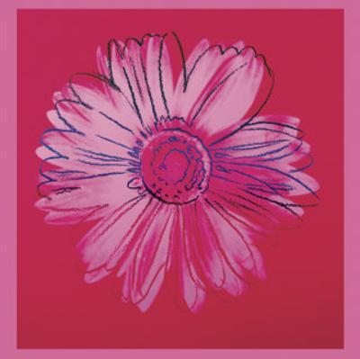 Daisy, c.1982  (crimson and pink)
