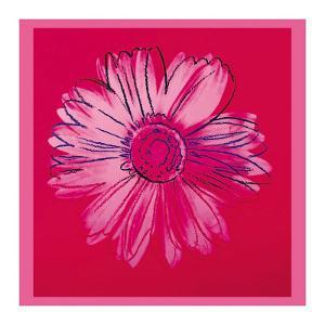 Daisy, c.1982 (Crimson and Pink) by Andy Warhol