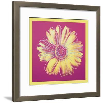Daisy, c.1982 (fuchsia & yellow)