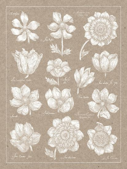 Anemone Plate I-Wild Apple Portfolio-Art Print