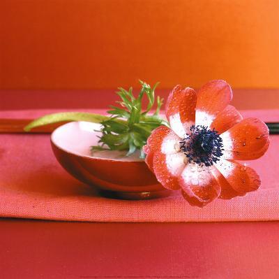 Anemone Rouge-Amelie Vuillon-Art Print