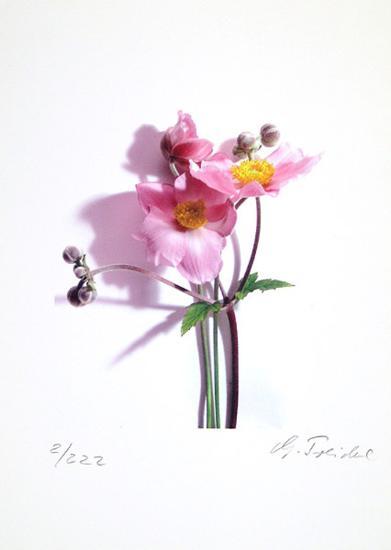 Anemone-Gerhard Treichel-Limited Edition