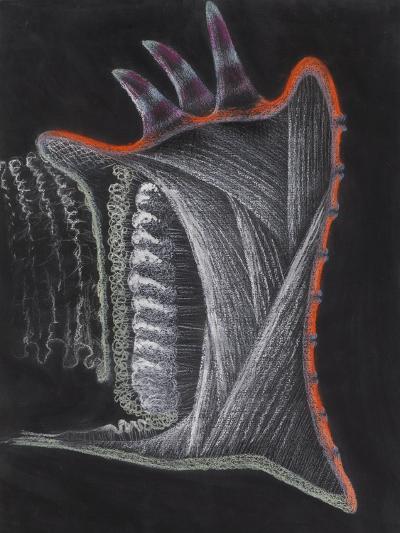 Anemone-Philip Henry Gosse-Giclee Print