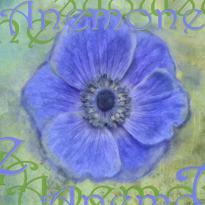 https://imgc.artprintimages.com/img/print/anemone_u-l-q12u08t0.jpg?p=0