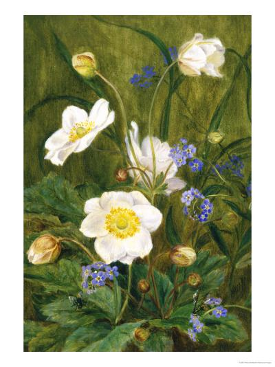 Anemones and Forget-Me-Nots-Maria Krabbe-Giclee Print