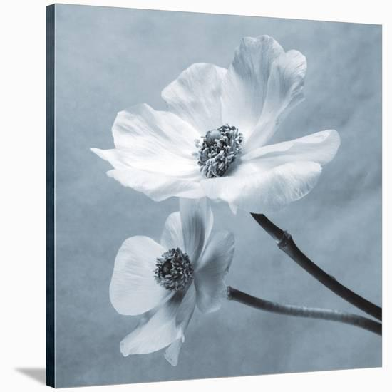 Anemones-Steven N^ Meyers-Stretched Canvas Print