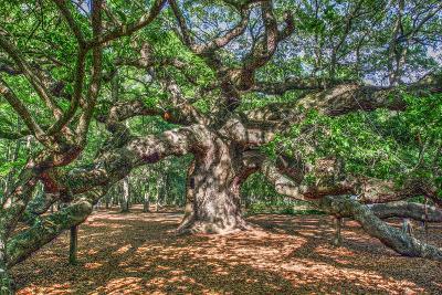 Angel Oak-Robert Goldwitz-Photographic Print