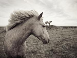 Horses in Field by Angela Drury