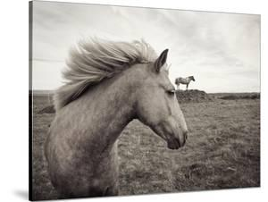 Horses in Field by Angela Drury
