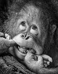 Big Smile..Please by Angela Muliani Hartojo
