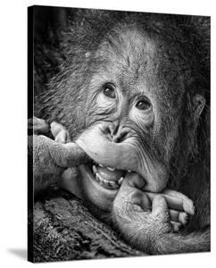 Big Smile..Please by Angela Muliani Hartojo