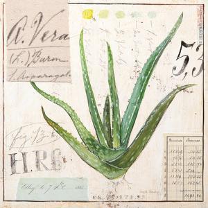 Aloe Vera…Sketchbook by Angela Staehling