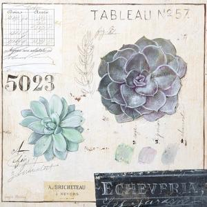 Echeveria…Sketchbook by Angela Staehling