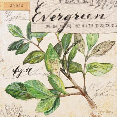 Evergreen Branch…Sketchbook by Angela Staehling