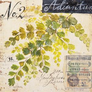 Maidenhair Fern…Sketchbook by Angela Staehling