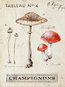 Nature's Mushrooms by Angela Staehling