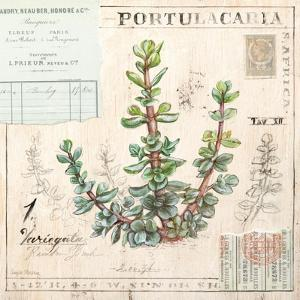 Portulacaria…Sketchbook by Angela Staehling