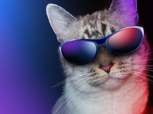 Cool Party Cat With Sunglasses by Angela_Waye